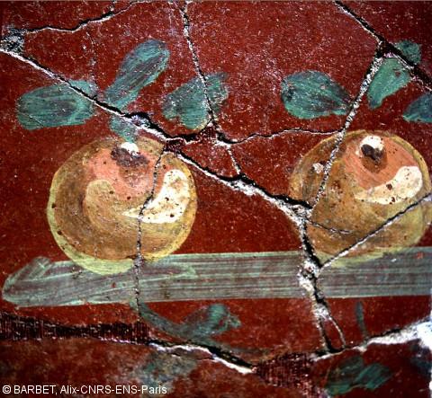 afpma-narbonne-fresque-pomme